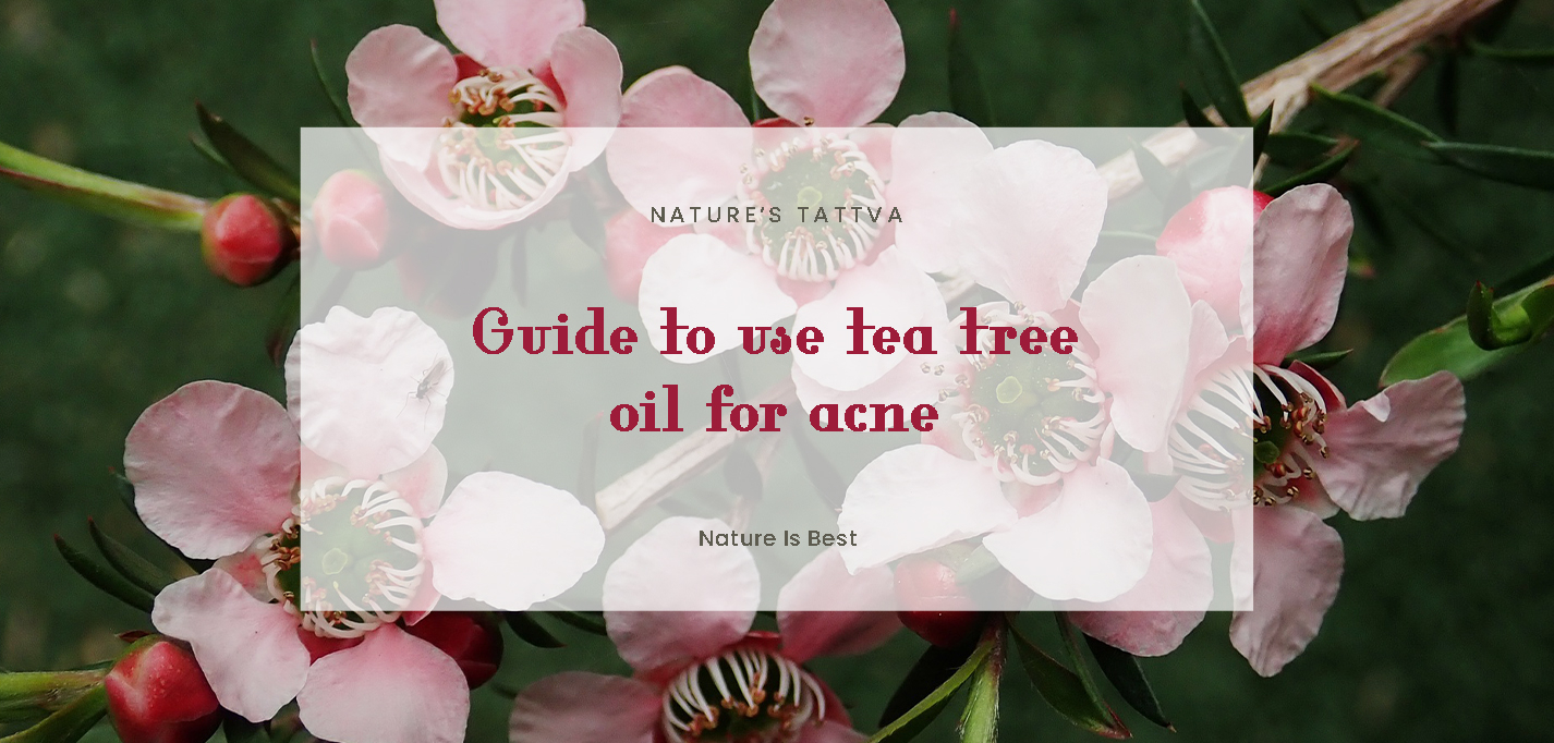 Guide To Use Tea Tree Oil For Acne